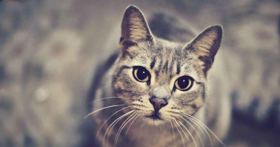 Сонник: приснилась кошка, расшифровка сна