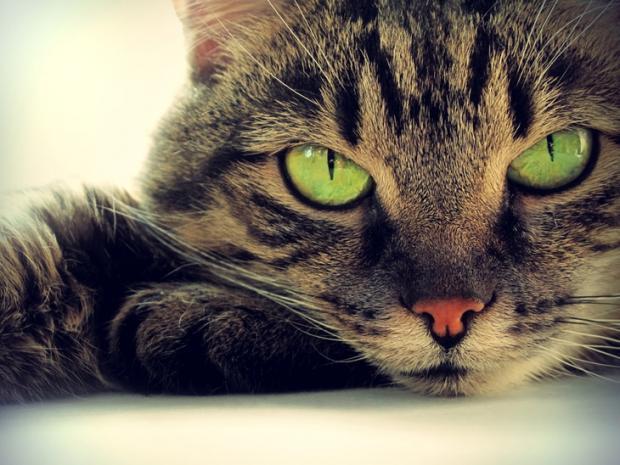 Народные приметы: кошка