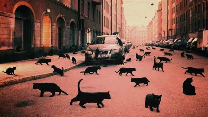 Картинки по запросу Народные приметы: кошка