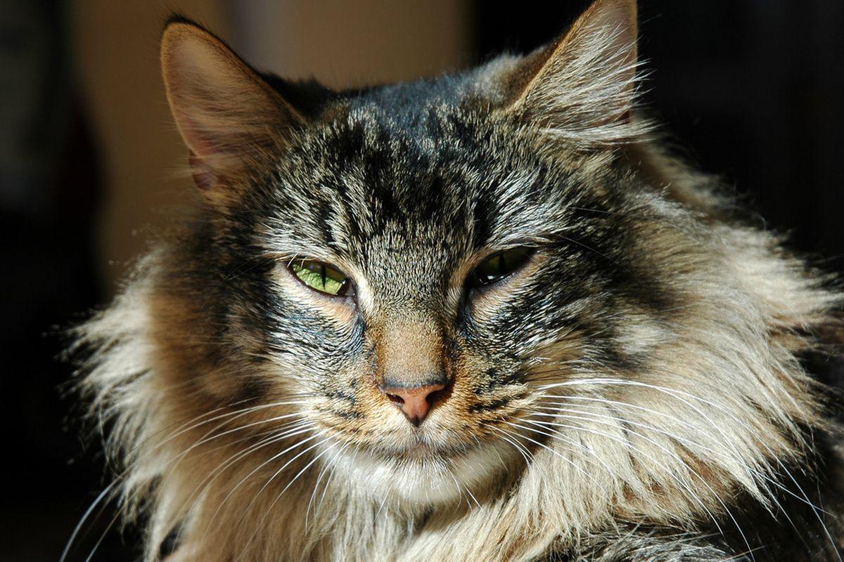 """Картинки по запросу """"Как вели бы себя знаки Зодиака, если были котами"""""""
