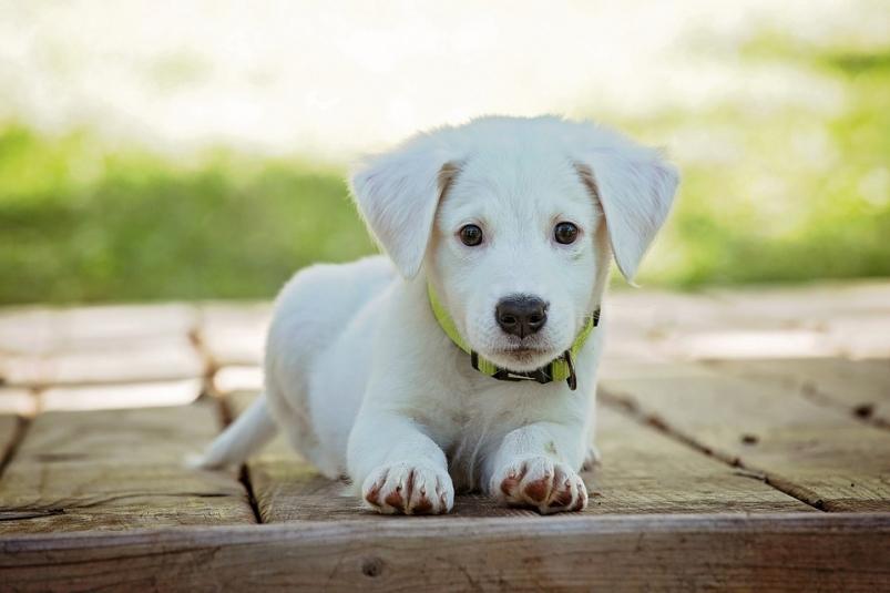 """Картинки по запросу """"Какая собака лучше всего подходит вашему знаку Зодиака"""""""