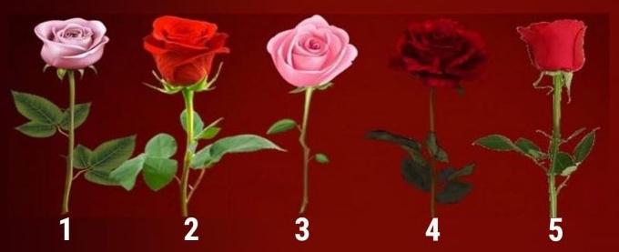 Тест: выберите розу и узнайте, когда ваше желание сбудется