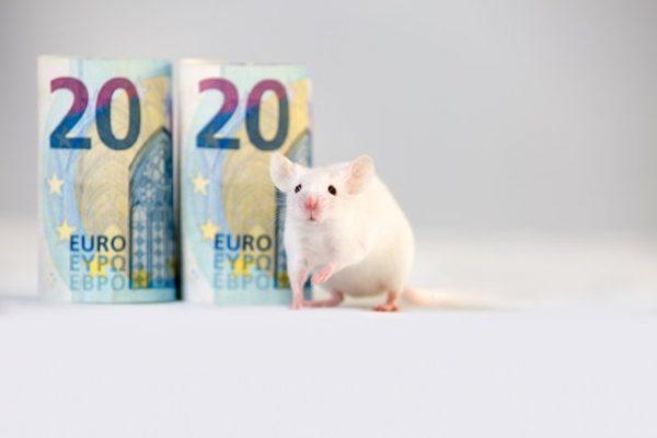 Фінансовий гороскоп на 2020 рік - рік Щура - для кожного знака ...