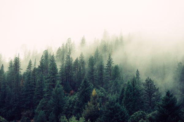 Бесплатные стоковые фото на тему деревья, дымка, лес
